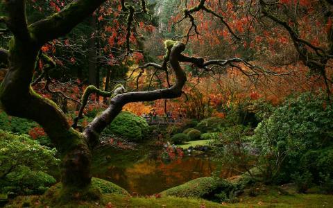 在总部森林照片河