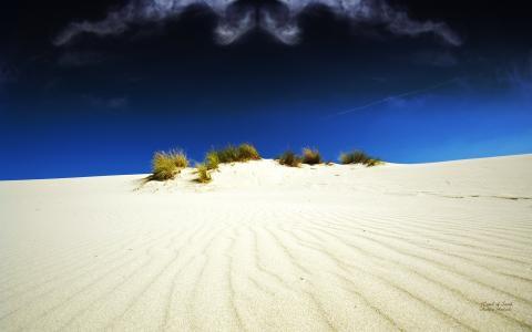 在白色沙漠的植被