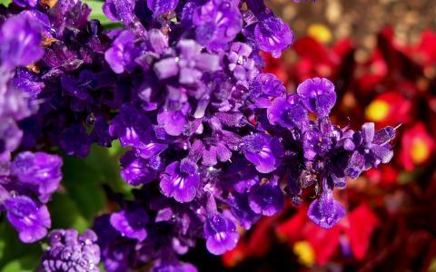 在花园里的紫色花朵