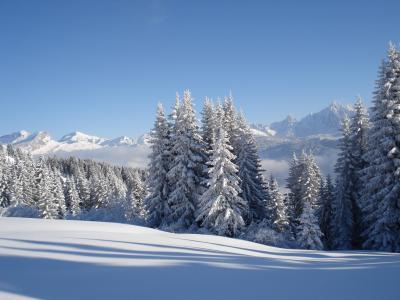 在梅杰夫,法国的滑雪胜地的积雪的冷杉木