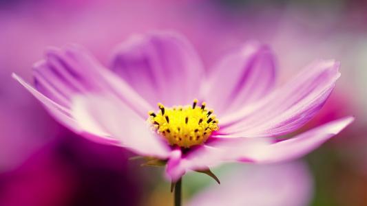 丁香空间鲜花