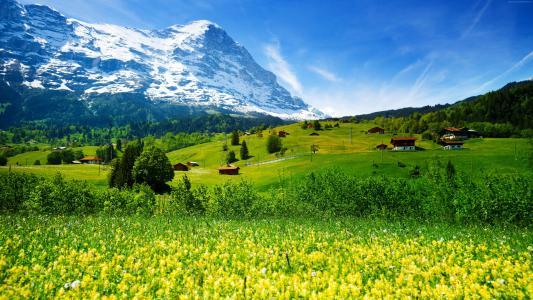 野花和绿色的草地背景下的山和蓝天,瑞士