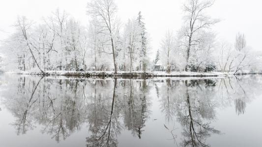 树的思考在雪中