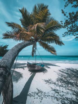 海边的椰树微信背景