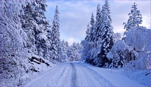 在树中的积雪覆盖的道路