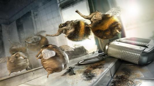 剃光的大黄蜂