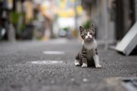 一只灰色的小猫正坐在路上