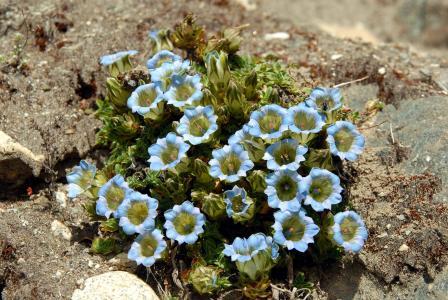 蓝色的花,在一块石头上