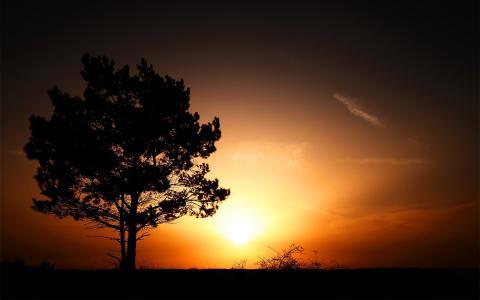 太阳在一棵孤独的树后面