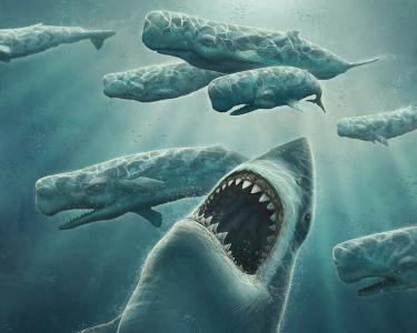 狩猎暴牙鲨鱼