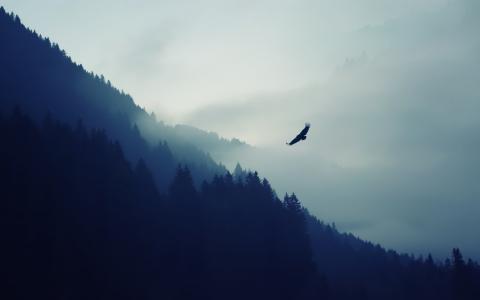 在雾的老鹰在山的背景