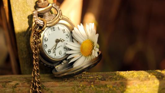 时钟和洋甘菊