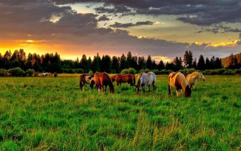 一群马在夏天