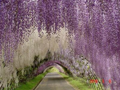 日本的空中花园