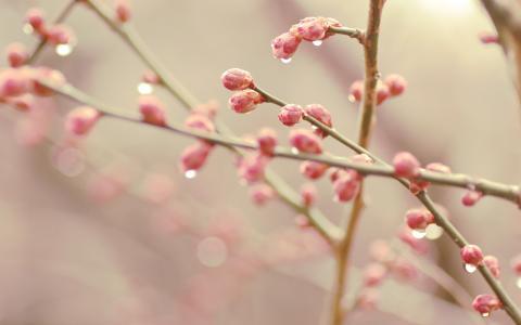 春天的芽正在盛开