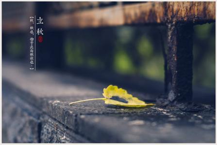 二十四节气立秋唯美落叶