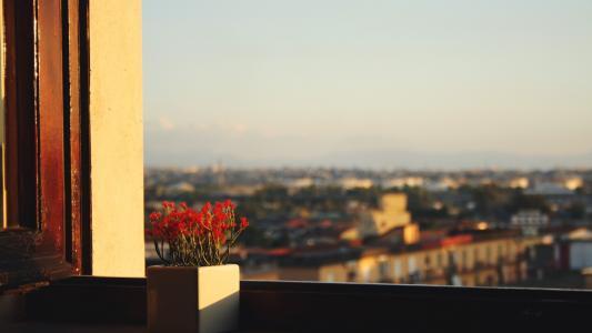 红色的花朵在窗台上的锅
