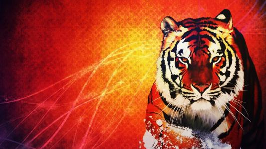 在橙色背景的橙色老虎