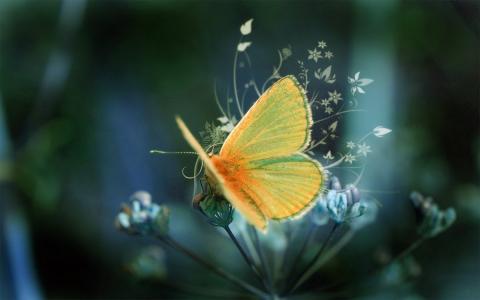 黄色蓬松的蝴蝶