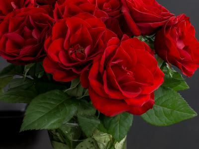 火红的玫瑰花