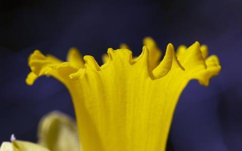 Narcissa的小号,鲜花