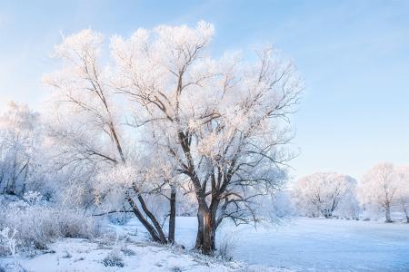 风景如画的冬季自然风光