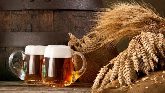 两杯啤酒和小麦的耳朵