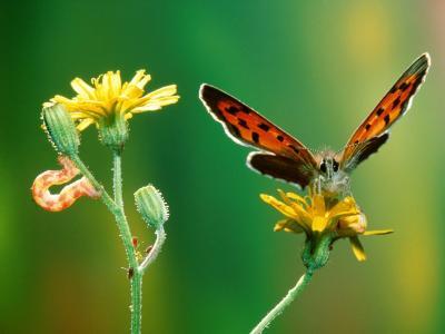 蝴蝶和毛虫