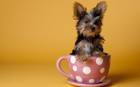 在杯子里的狗