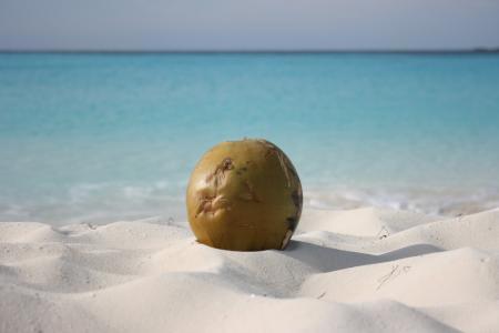 椰子在古巴Cayo Largo度假村的海滩上