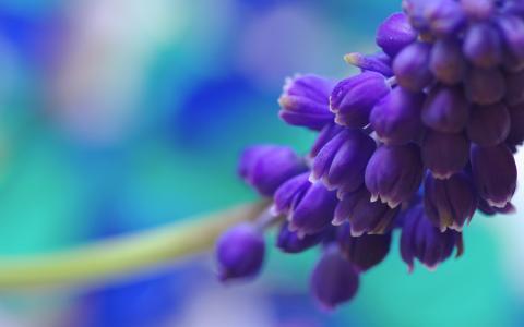 一群蓝色的花朵
