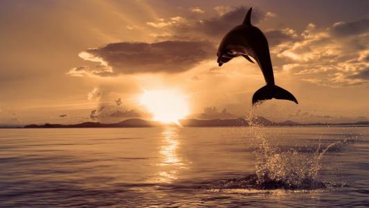 海豚跳出水面