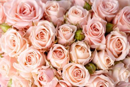 粉红玫瑰特写的花束