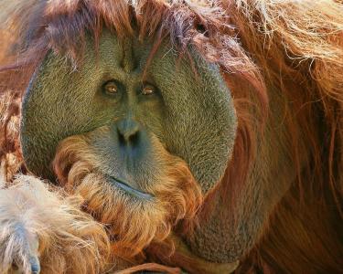 猴子的看法