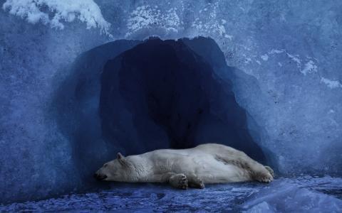 北极熊在冰洞里睡觉