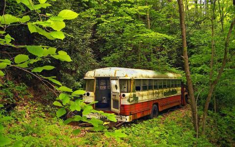 在丛林生锈的巴士