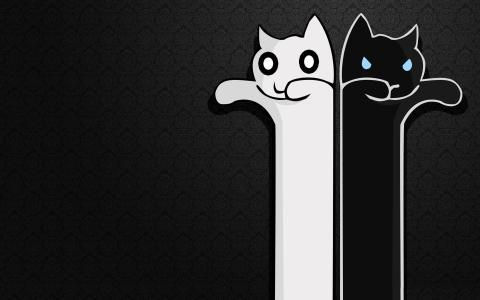 白色和黑猫,背景