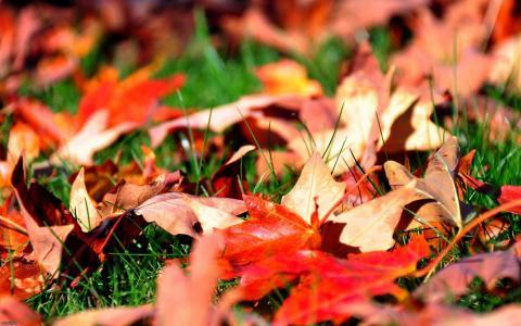 秋天的落叶,在草地上