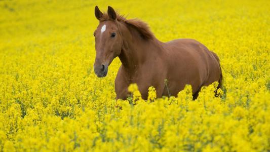 马在黄色的颜色
