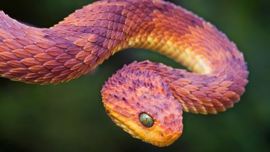 废弃的毒蛇