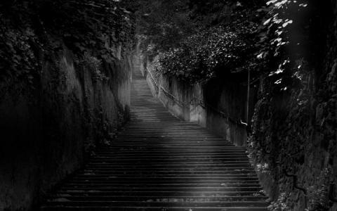 在黑丛林中的黑色楼梯