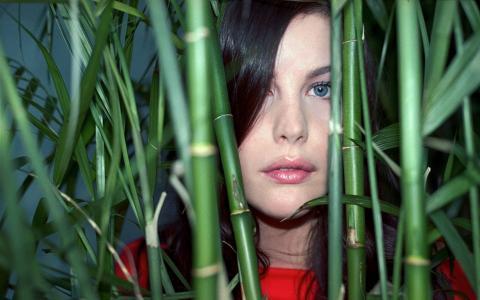 Liv泰勒在竹子