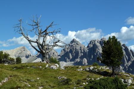 在Selva,意大利滑雪胜地的干燥树