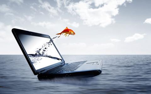 笔记本电脑和小鱼