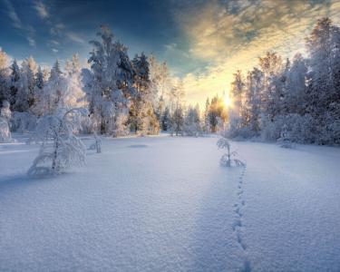 日落在白雪覆盖的森林里