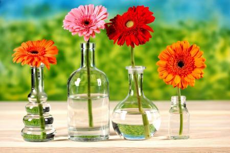 在瓶子里的菊花