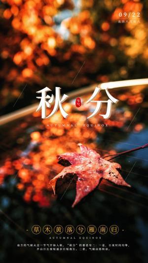 秋分落叶风景海报
