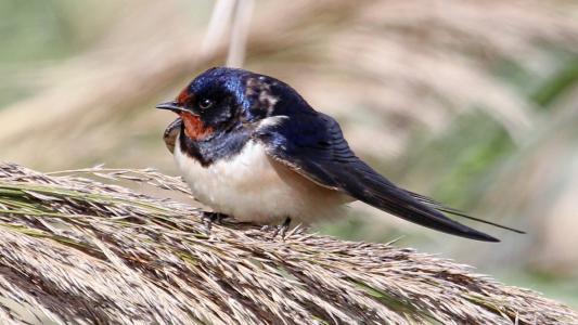 一只有趣的小鸟坐在一堆草地上