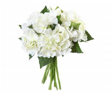 白色背景上绣球花精致的白色花束