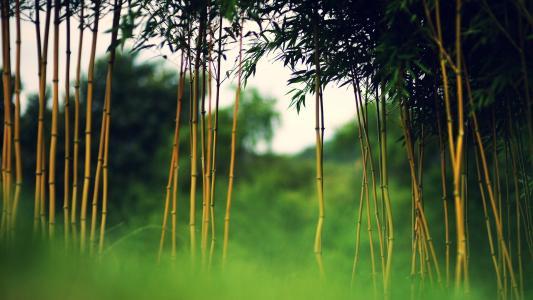 年轻的竹子
